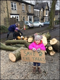 Sheffield Trees campaign, photo Sheffield Tree Action Groups